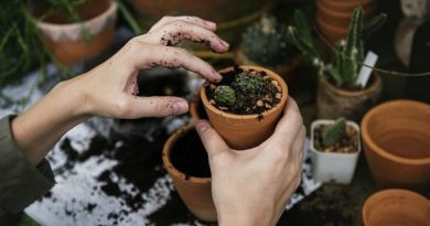 Using Your Garage to Help You Garden- Freethoughtsportal-1