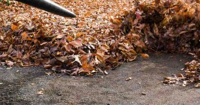3 Essential Tips On Buying a Leaf Blower